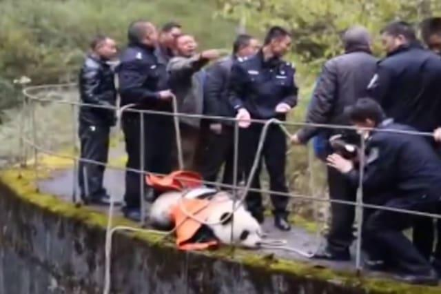 Panda rescued after falling into power station