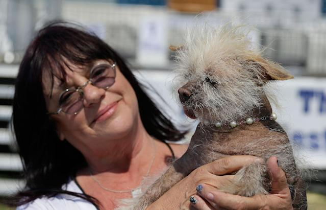 <p>Linda Elmquist, of Tucson, Ariz., holds up Josie, her Chinese crested mix, before the start of the World's Ugliest Dog Contest at the Sonoma-Marin Fair Friday, June 23, 2017, in Petaluma, Calif. (Photo: Eric Risberg/AP) </p>