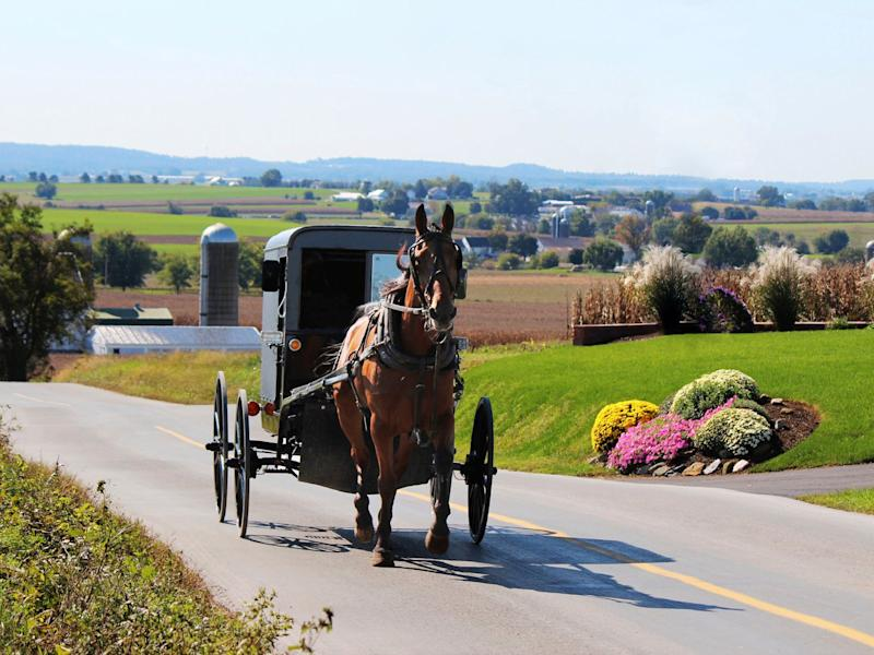 Pennsylvania Dutch Country Horse and Buggy