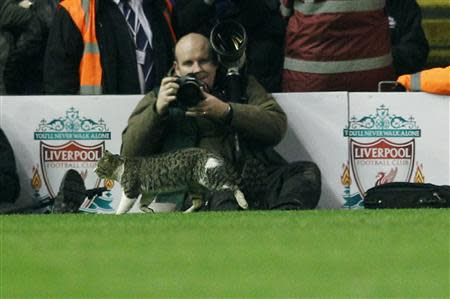A cat walks on the pitch during the English Premier League soccer match between Liverpool and Tottenham Hotspur at Anfield in Liverpool
