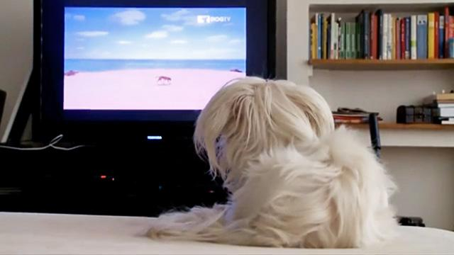 Will DOGTV Turn Your Pooch Into a Couch Pet-ato?