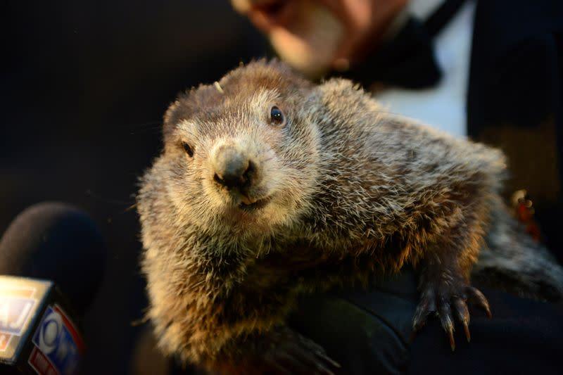 Early spring a 'certainty' says groundhog, but no word on Super Bowl champ