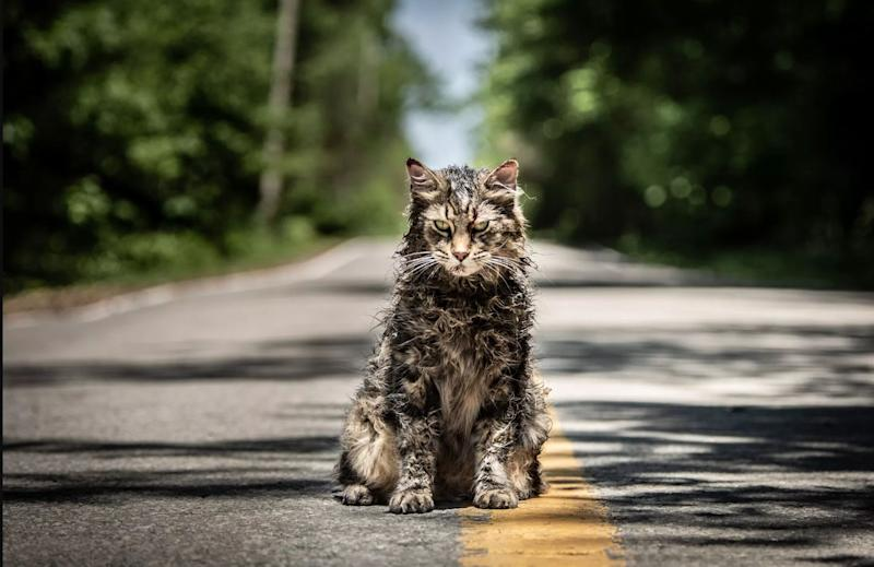 Pet Sematary Cat Passes Away