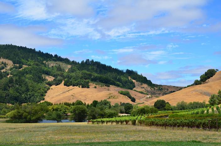 This July 21, 2014 photo shows a view of US filmmaker, director, screenwriter, producer, George Lucas' Skywalker Ranch located in Nicasio, California (AFP Photo/Veronique Dupont)
