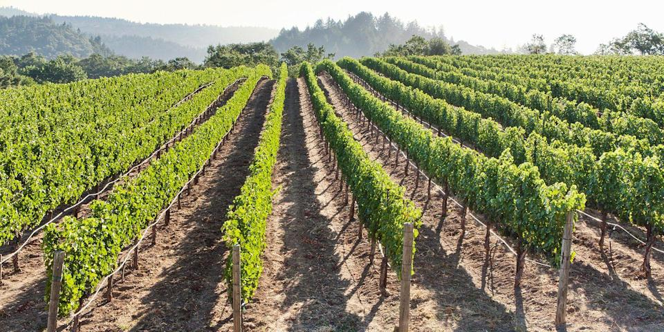 "<p><strong>Best for Wine Lovers </strong></p><p>There's a lot to love about Napa Valley. It's just an hour's drive from <a href=""https://www.bestproducts.com/fun-things-to-do/g2691/fun-things-to-do-in-san-francisco-sf/"" rel=""nofollow noopener"" target=""_blank"" data-ylk=""slk:San Francisco"" class=""link rapid-noclick-resp"">San Francisco</a>, there are hundreds of <a href=""https://www.bestproducts.com/fun-things-to-do/g2610/scenic-napa-valley-wineries-and-tours/"" rel=""nofollow noopener"" target=""_blank"" data-ylk=""slk:world-class wineries"" class=""link rapid-noclick-resp"">world-class wineries</a> to stop in for a tasting (A pinot noir on the deck overlooking vast vineyards? Yes, please!), and there are plenty of gourmet restaurants, including Thomas Keller's famed <a href=""https://www.tripadvisor.com/Restaurant_Review-g33300-d493634-Reviews-The_French_Laundry-Yountville_Napa_Valley_California.html"" rel=""nofollow noopener"" target=""_blank"" data-ylk=""slk:French Laundry"" class=""link rapid-noclick-resp"">French Laundry</a>. </p><p><strong><em>Where to Stay: </em></strong><a href=""https://www.tripadvisor.com/Hotel_Review-g32766-d81242-Reviews-Napa_Valley_Marriott_Hotel_Spa-Napa_Napa_Valley_California.html"" rel=""nofollow noopener"" target=""_blank"" data-ylk=""slk:Marriott Napa Valley Hotel & Spa"" class=""link rapid-noclick-resp"">Marriott Napa Valley Hotel & Spa</a>, <a href=""https://www.tripadvisor.com/Hotel_Review-g32766-d1141009-Reviews-The_Westin_Verasa_Napa-Napa_Napa_Valley_California.html"" rel=""nofollow noopener"" target=""_blank"" data-ylk=""slk:The Westin Verasa Napa"" class=""link rapid-noclick-resp"">The Westin Verasa Napa</a></p>"