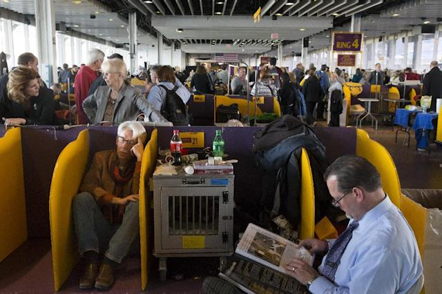 Brant Broon, of New Orleans, left, rests in the benching area of Pier 92 during the Westminster Kennel Club dog show, Monday, Feb. 10, 2014, in New York. (AP Photo/John Minchillo)
