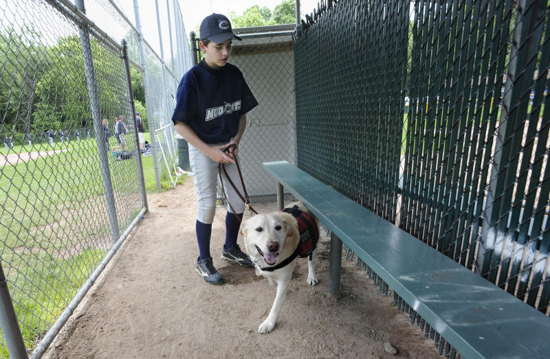 In this Sunday, May 29, 2011 photo, Jeff Glazer guides his allergy-sniffing dog, Riley through a dugout of a ball field before his ball game in Middlebury, Conn.  Riley accompanies Glazer to ensure there are no peanut products or residue that could trigger his life-threatening allergic reactions.  (AP Photo/Jessica Hill)