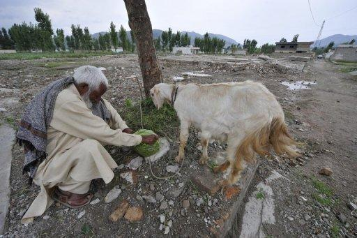 Zain Mohammad, former neighbour of Osama bin Laden, feeds his goat near the site of the slain Al-Qaeda leader's demolished compound in northern Abbottabad. One year after Bin Laden's death, his network lies in ruins even if some supporters, whether lone wolf extremists or Al-Qaeda members, still brandish the jihadi banner