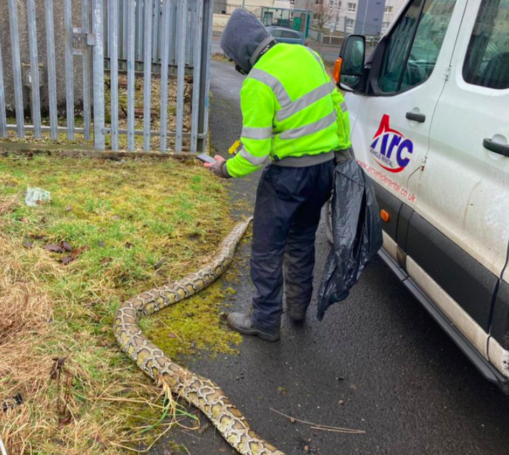 Pictures of huge snakes in Greenock appeared on social media. (Twitter/@InverclydeNC)