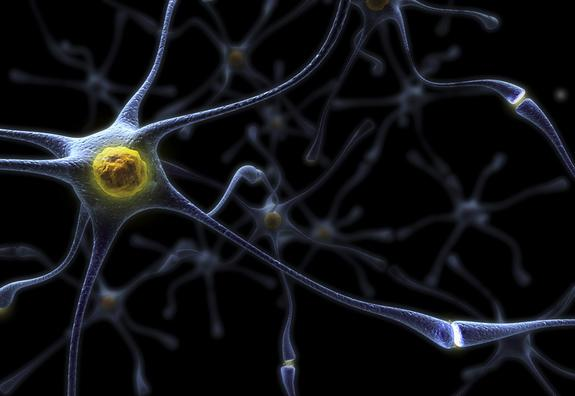 An artist's rendering of neurons in the human brain.
