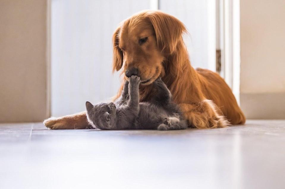Does this look like the face of a dog who hates cats? We don't think so! They're the best of friends.