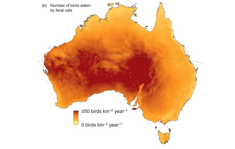 Cats kill 1 million Australian birds a day, study shows