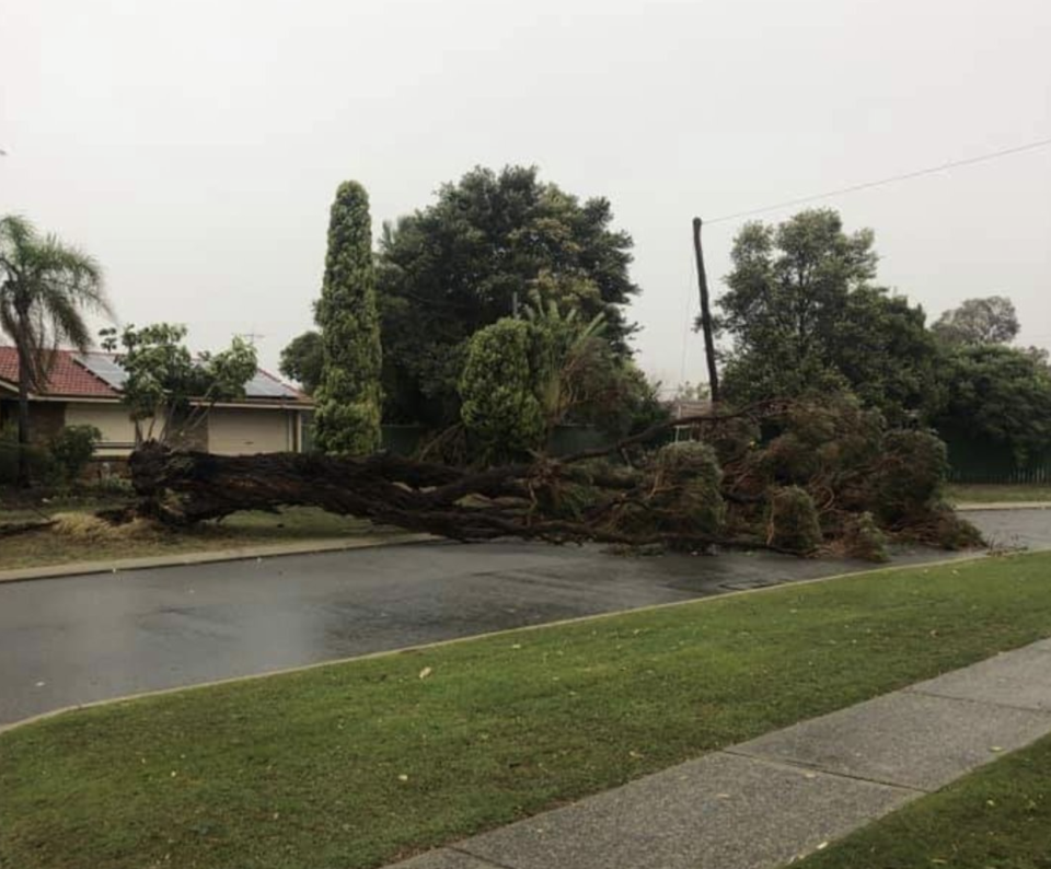 A tree ripped down in Thornlie. Source: Twitter/ Ross Nagle