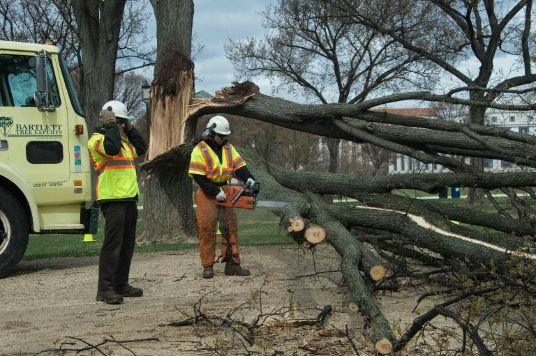 A worker chops a fallen tree limb on the National Mall after strong winds hit Washington, DC