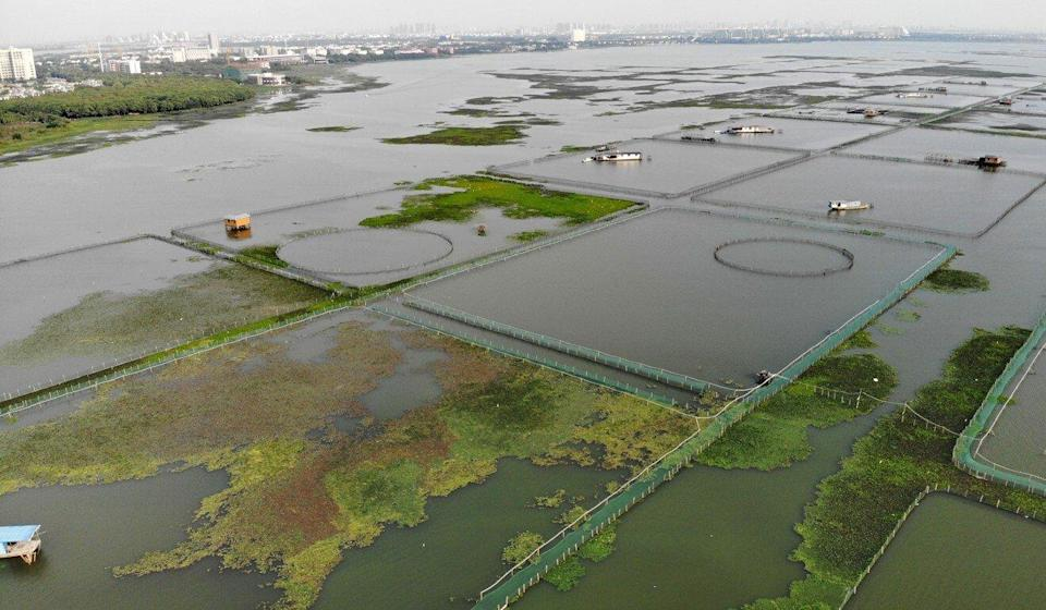 Aerial shot of hairy crab farms on Yangcheng Lake in China. Photo: SCMP
