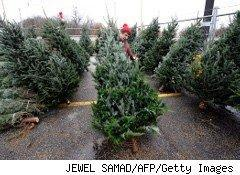 Worker at a Christmas tree lot
