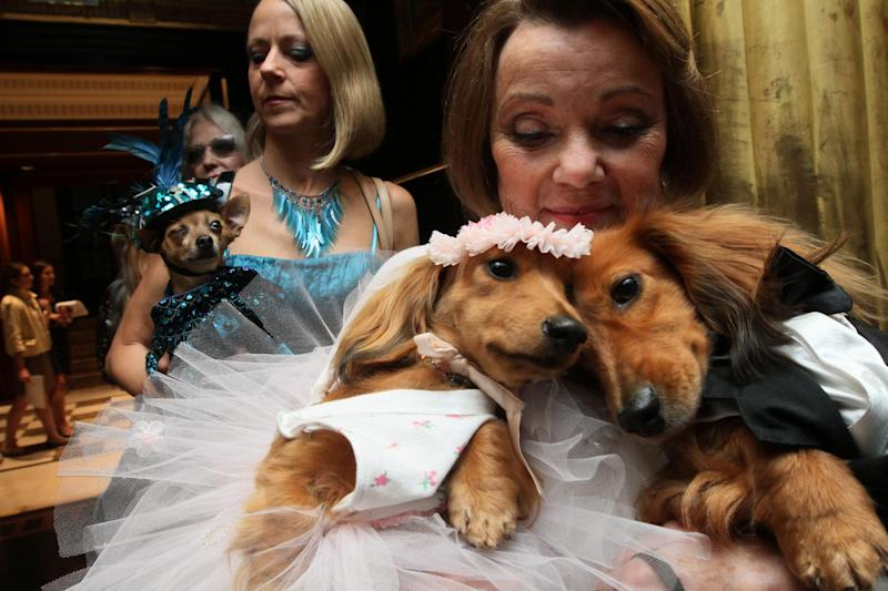 """Dachshunds dressed for the occasion, Dee Dee, foreground left, and her cousin Clifford, foreground right, are held by their owner Valerie Diker, as they and other dogs and people wait for the start of the most expensive wedding for pets Thursday July 12, 2012 in New York. The black tie fundraiser, where two dogs were """"married"""", was held to benefit the Humane Society of New York. Dee Dee and Clifford were part of the wedding party. (AP Photo/Tina Fineberg)"""