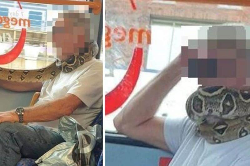 Bus Passenger Uses Python as 'Face Mask' and Protective Gear Around His Neck in Manchester