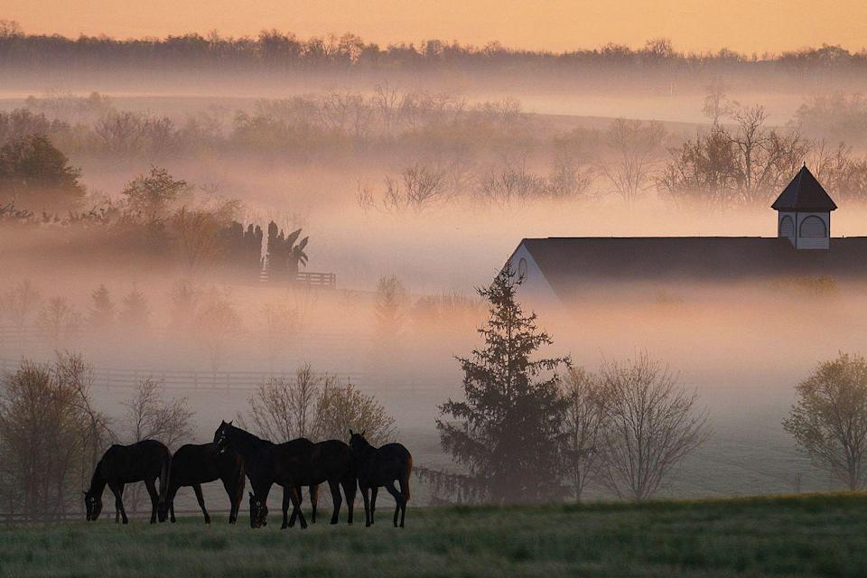 """<p>Here, in the """"Horse Capital of the World,"""" you and your inner circle can catch an event at the famed <a href=""""http://www.keeneland.com/"""" rel=""""nofollow noopener"""" target=""""_blank"""" data-ylk=""""slk:Keeneland"""" class=""""link rapid-noclick-resp""""><u>Keeneland</u></a> race course or visit one of the 400 local horse farms. Beyond equine delights, there's plenty to do: Grab dinner in a former bank vault at <u><a href=""""http://www.21cmuseumhotels.com/lexington/eatdrink/lockbox/"""" rel=""""nofollow noopener"""" target=""""_blank"""" data-ylk=""""slk:Lockbox at 21c Museum Hotel"""" class=""""link rapid-noclick-resp"""">Lockbox at 21c Museum Hotel</a>,</u> make like Daniel Boone and wander the <u><a href=""""http://www.visitlex.com/flavors/brewgrass-trail/"""" rel=""""nofollow noopener"""" target=""""_blank"""" data-ylk=""""slk:Brewgrass Trail"""" class=""""link rapid-noclick-resp"""">Brewgrass Trail</a>,</u> or catch a show at the magnificent <a href=""""https://www.lexingtonoperahouse.com/"""" rel=""""nofollow noopener"""" target=""""_blank"""" data-ylk=""""slk:Lexington Opera House"""" class=""""link rapid-noclick-resp""""><u>Lexington Opera House</u></a>. And of course there's no shortage of <a href=""""http://www.visitlex.com/bourbon/"""" rel=""""nofollow noopener"""" target=""""_blank"""" data-ylk=""""slk:bourbon tours"""" class=""""link rapid-noclick-resp""""><u>bourbon tours</u></a>, flights, and sips to be had in the birthplace of the American spirit.</p><p><strong><em>For more information, visit </em></strong><a href=""""http://www.visitlex.com/"""" rel=""""nofollow noopener"""" target=""""_blank"""" data-ylk=""""slk:visitlex.com"""" class=""""link rapid-noclick-resp""""><strong><em>visitlex.com</em></strong></a><strong><em>.</em></strong></p>"""