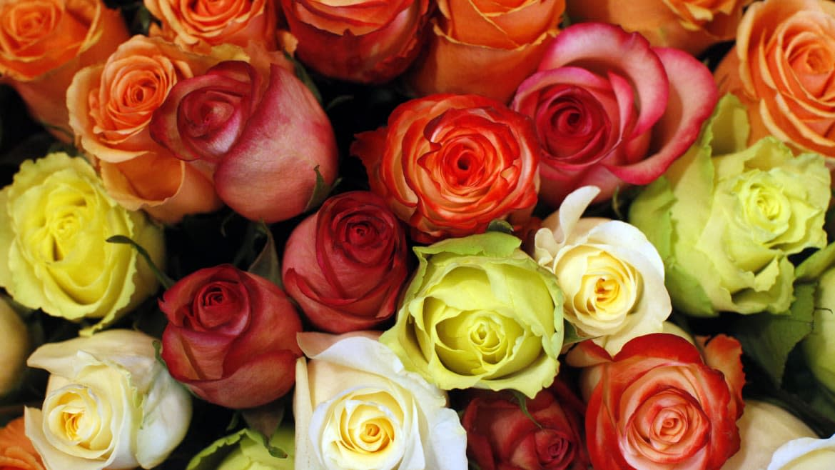 Wealthy Writer Who Got Through Lockdown by Tripling Her Order of Fresh Flowers Stokes Outrage