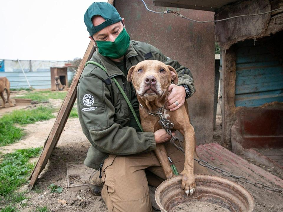 Nearly 200 dogs were rescued by animal welfare charity Humane Society International (HSI) and taken to the US from a dog meat farm in South Korea (Humane Society International/Facebook)