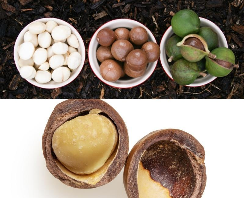 Collage Of Macadamia Nuts