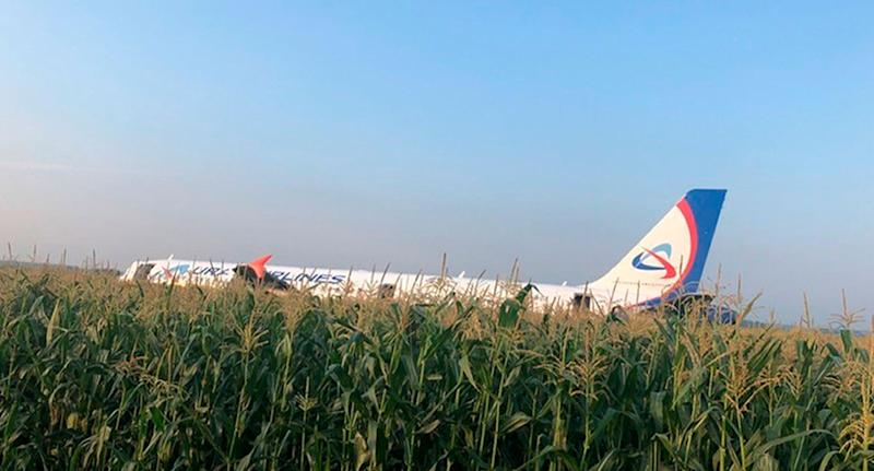 The cornfield where Ural Airlines pilot made an emergency landing.