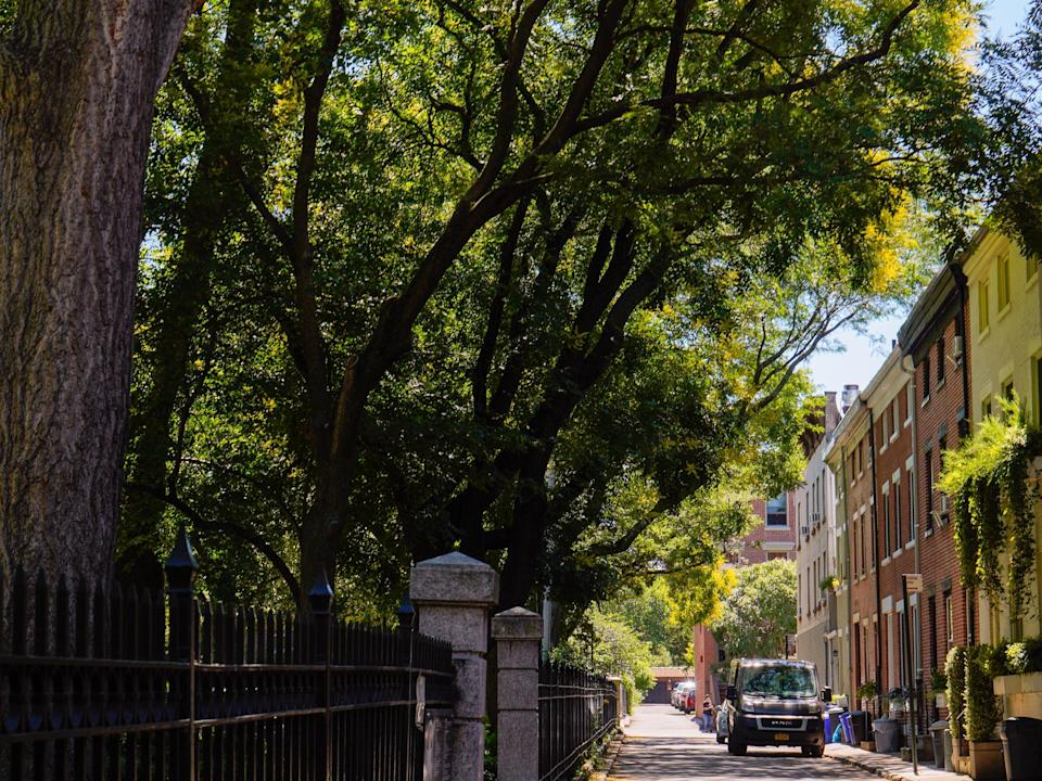 A row of residential mews on a street shaded by trees.