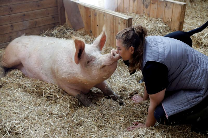 """Meital Ben Ari, a co-founder of """"Freedom Farm"""" kisses Omri a pig, in his sty at the farm, which serves as a refuge for mostly disabled animals in Moshav Olesh, Israel. (Photo: Nir Elias/Reuters)"""