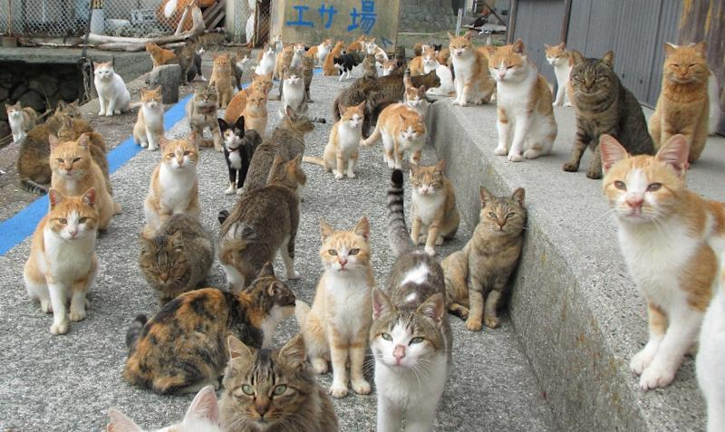 More than 140 cats occupy the tiny island of Aoshima in southern Japan