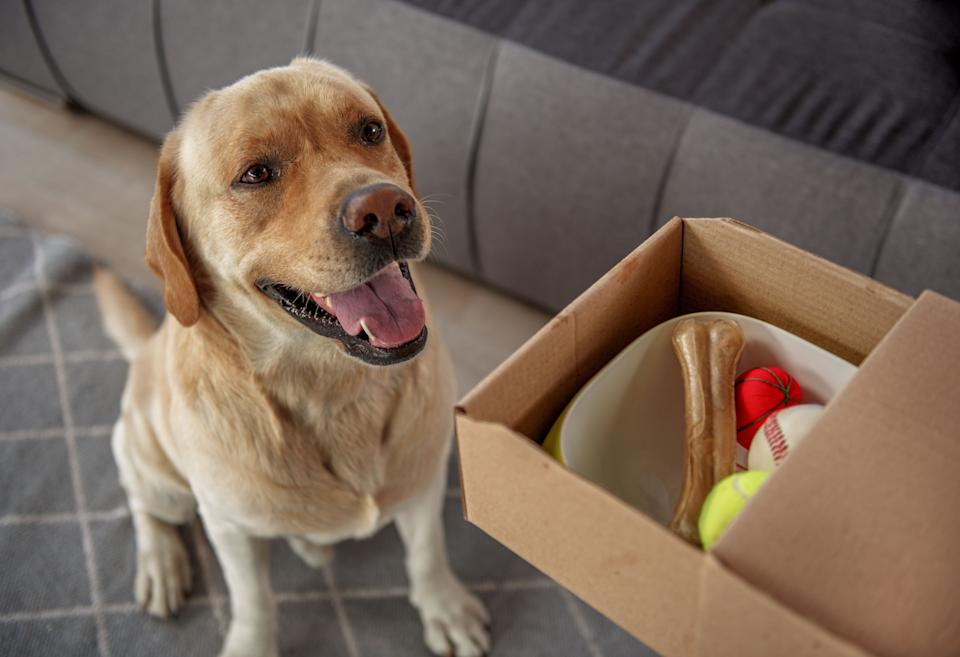New pet owners should bookmark these pet food delivery alternatives to Amazon and Walmart. (Photo: YakobchukOlena via Getty Images)