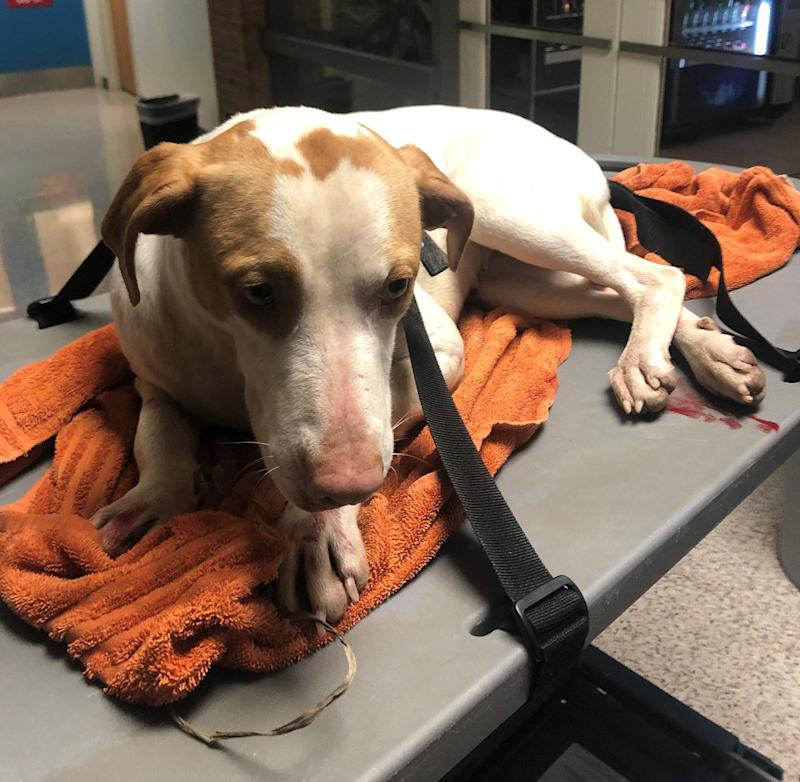 Tenn. Dog Survives Being Thrown off 29-Foot Overpass, as Police Investigate