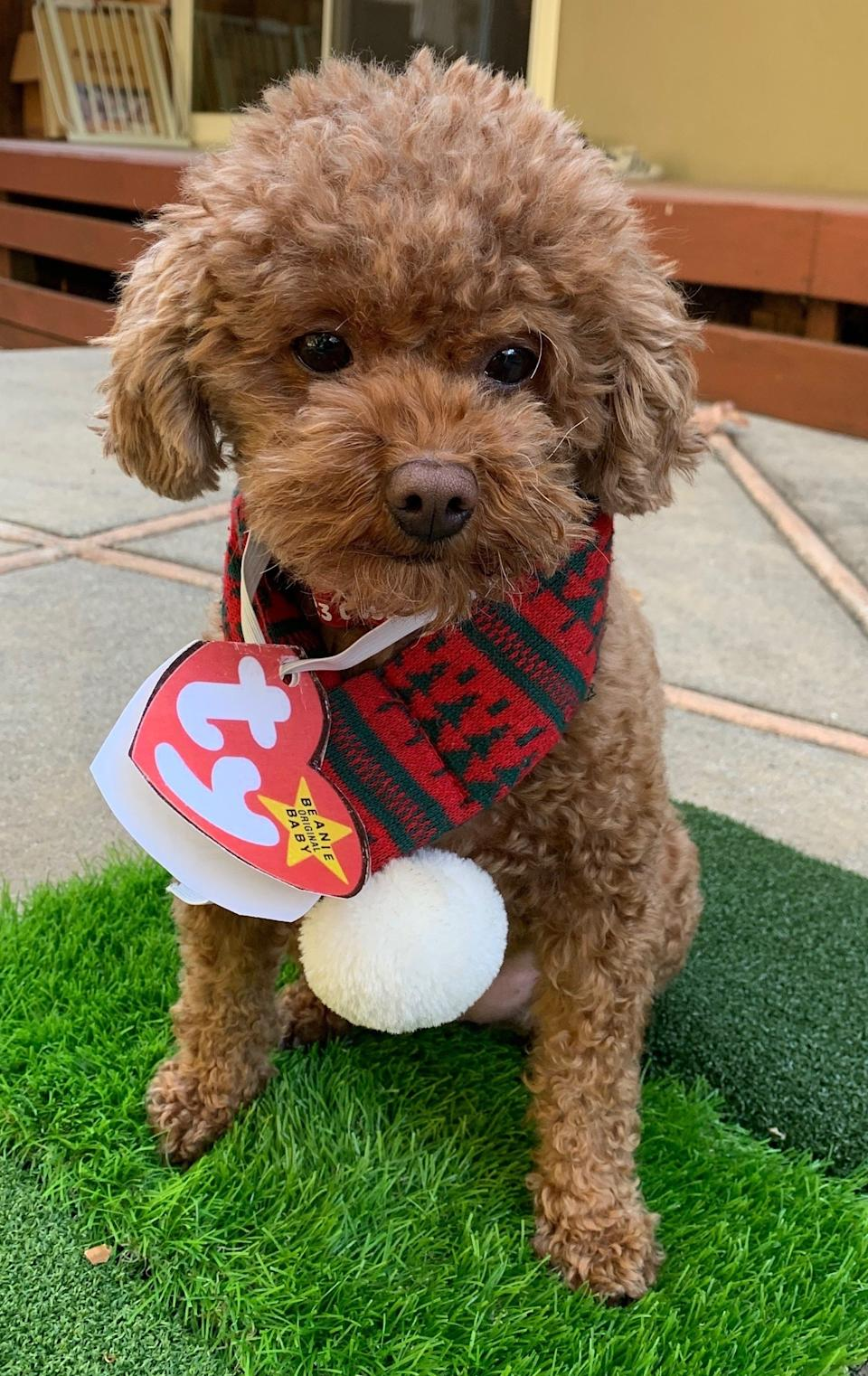 USA TODAY Life and Travel intern Jenna Ryu's family dressed their dog, Coco, up as a very big Beanie Baby. I'd collect Coco any day.