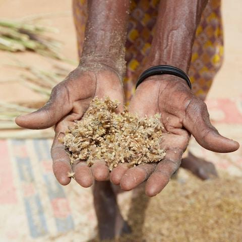 A handful of millet, a drought resistant crop - Credit: Yuki Sugiura/British Red Cross