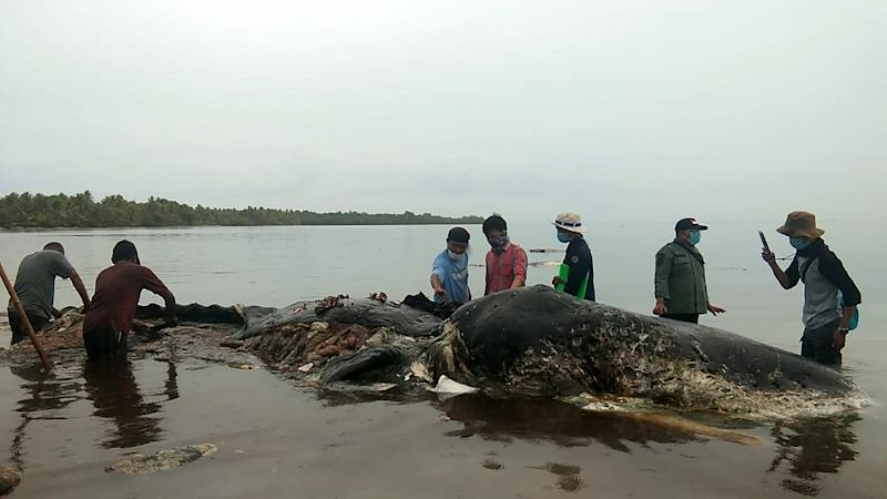 Conservation group WWF Indonesia said its staff found four plastic bottles, 25 plastic bags, 3.26 kilogrammes of raffia rope and 115 plastic cups (AFP Photo/La Ode M. Saleh Hanan)