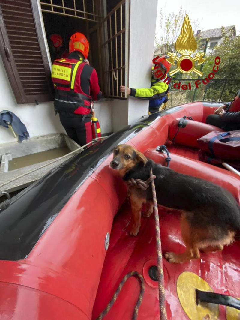 An evacuated dog sits in a dinghy