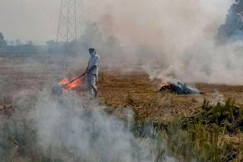 Early Harvest, Labour Crunch Due to Pandemic Led to Rise in Stubble Burning in Punjab & Haryana: Officials