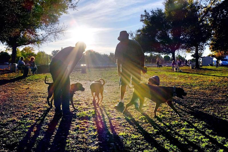 In this Sunday Dec. 1, 2013 photo, visitors and their dogs enjoy a sunny afternoon at the Sepulveda Basin Dog Park in the Encino section of Los Angeles. Dr. Gary Weitzman, president of the San Diego Humane Society, has worked with tens of thousands of stray dogs over the last quarter century and says there is no question that pets and people ommunicate, but some are getting more out of it than others. Wags and barks speak volumes when it comes to understanding what a dog is saying, but there are also clues in a dog's eyes, ears, nose or the tilt of its head. (AP Photo/Richard Vogel)
