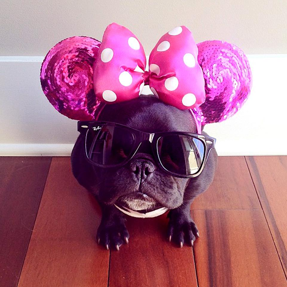 PIC BY SONYA YU / CATERS NEWS - (PICTURED: Trotter trying to outdo Minnie Mouse) - An adorable little French Bulldog has been playing dress-up and has impressively gathered a following of 30,000 on Instagram. The photogenic hipster, called Trotter, wears a range of outfits from a beret, moustache, top hat and pipe to high heels. Owner and Trotters photographer Sonya Yu said her little pup is simply a natural in front of the camera. SEE CATERS COPY