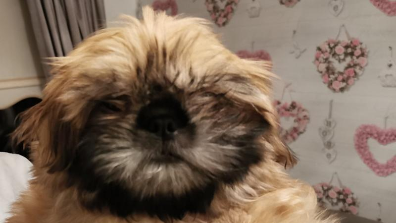 Fire crews rescue puppy trapped in reclining sofa