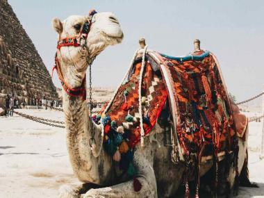 MIT researchers create gel that mimics camel fur, could help keep objects cool for days