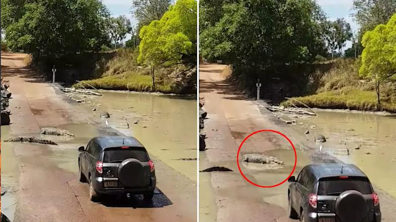 Incredible video shows crocodiles preventing a driver from driving across the road. Source: Kimberley Off-Road Adventure Tours.