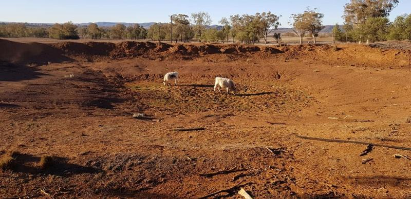 Weaner calves standing in bone dry dam at drought-ridden Doctor's Creek outside Bingara in North West NSW. Source: Rhonda King