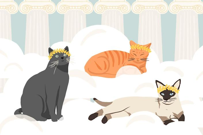 God and Goddess Names For Your Cat