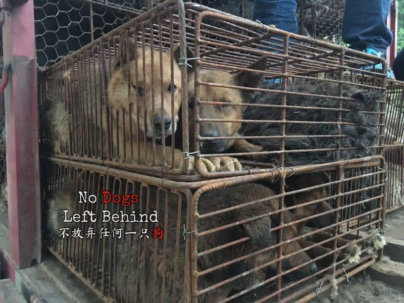 Dogs held in cages on a slaughter truck