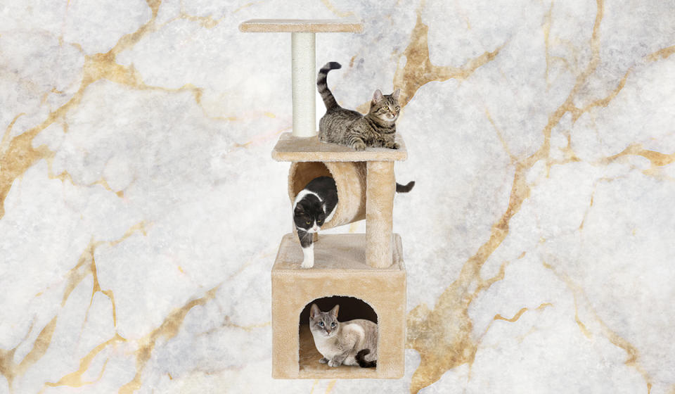 Isn't it about time your cats grew up and got their own place? (Photo: Walmart)
