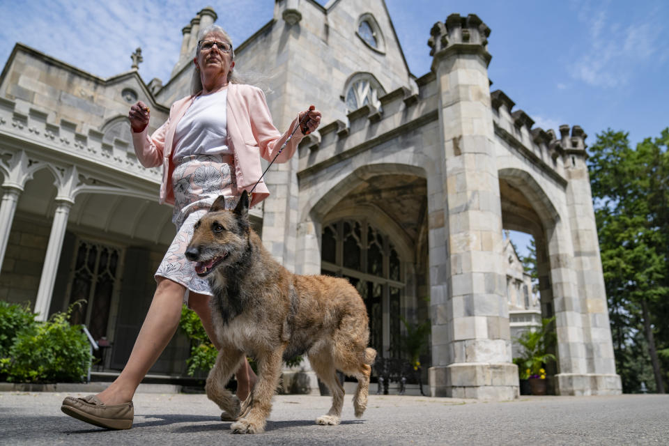 A Belgian laekenois is presented for journalists during a news conference, Tuesday, June 8, 2021, in Tarrytown, N.Y., at the Lyndhurst Estate where the 145th Annual Westminster Kennel Club Dog Show will be held outdoors, (AP Photo/John Minchillo)