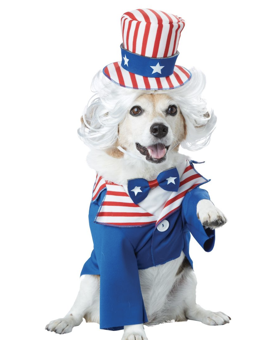white dog wearing Uncle Sam Pet Costume with striped red and white hat and blue arms
