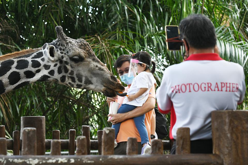 SINGAPORE, July 6, 2020 -- Visitors wearing face masks feed a giraffe in the Singapore Zoo on July 6, 2020. The Singapore Zoo reopened to the public on Monday after the easing of lockdown measures in the fight against COVID-19 pandemic.(Photo by Then Chih Wey/Xinhua via Getty) (Xinhua/ via Getty Images)