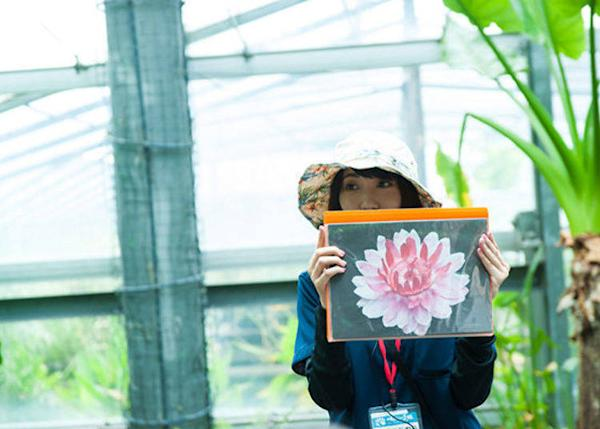 """▲The lifespan of the Victoria amazonica flower is only 3 days. """"It is white on the first day it blooms, and on the second day becomes a beautiful pink color,"""" she explains as she shows us a picture."""